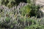 Flora y Fauna de Tenerife