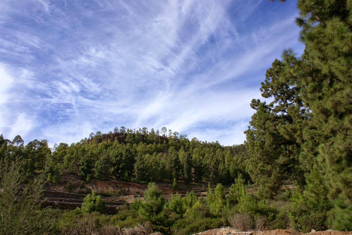 Red Canaria de Espacios Naturales Protegidos